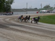 Marvin Raber driving Tag The Lady takes the lead in Race 3 at the Mahoning Co. Fair on Sept 2012 in Canfield, Ohio. Canfield Ohio, Horse Mane Braids, Lippizaner, Olympic Equestrian, Tennessee Walking Horse, Race 3, Sept 1, Clydesdale Horses, Harness Racing