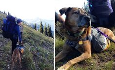 A great pack for hiking pups and tips for selecting, fitting and packing a dog pack and more gift ideas for keeping dogs safe on trail.