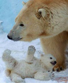 Bear and kid