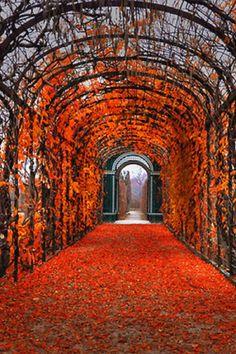 Autumn Arbor.