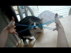 How to do Cat Whiskers, with string, step by step Kitty Whiskers, things to do during travel with kids I used to do these string games in elementary school, going to teach the kiddos!