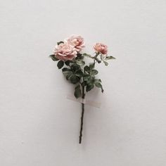 6月 バラ