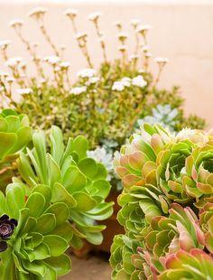 a história da casa com jardim de suculentas | ideias de fim de semana