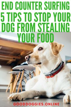 A dog stealing food is no news to any dog parent out there. When it comes to counter surging a dog will gain the abilities of a ninja whether you're there to stop them or not. But how can you prevent your dog from stealing food off the counter? #dogs