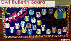Owl welcome bulletin board