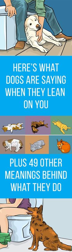 Here's Why Dogs Jump On You When You Get Home (Plus 49 Other Meanings Behind What They Do) is part of Dog sleeping positions - The position your dog sleeps in tells you a lot about them here's what they mean Dog Sleeping Positions, Sleeping Dogs, Baby Dogs, Animals And Pets, Cute Animals, Wild Animals, Baby Animals, Dog Information, Dogue De Bordeaux