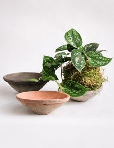 Kokedama dishes have landed! The perfect tabletop home for a small string garden.