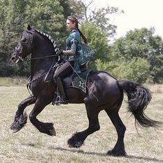 Friesian ~ a light draft horse from the Netherlands. They are graceful and nimble despite their size