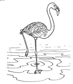 Image Detail For Coloring Pages Of Different Types Animals And Birds