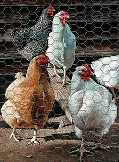 Farm/Country Art  |  Wild Wings