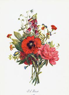 Poppy, Peony, Foxglove, Viola