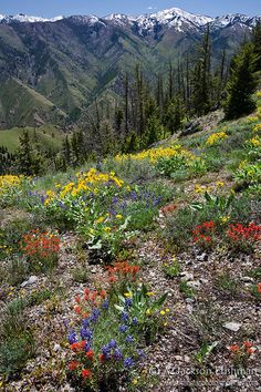 Summer color in the mountains - beautiful!