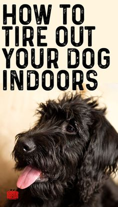 When the winter weather gets cold your dog still wants to exercise. Here are some dog lover tips on how to tire out tmyour dog indoors. #dogs Puppy Care, Pet Care, Excited Puppy, Puppies Tips, Baby Puppies, Puppy Biting, Puppy Training Tips, Potty Training, Dog Games
