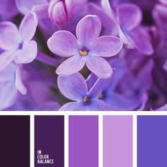 голубой, дизайнерские палитры, оттенки фиолетового, подбор цвета, почти-черный, синий, сиреневый, темно-фиолетовый, цвет гортензии, цвет фиалок, цвет фиолетовых орхидей, цветовое решение для дома.