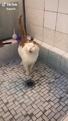 Much Easier Than Licking 😺🚿👅 Source by inspiringdad videos wallpaper cat cat memes cat videos cat memes cat quotes cats cats pictures cats videos Funny Cute Cats, Cute Cats And Kittens, Cute Funny Animals, Kittens Cutest, Cats In Love, Kittens Meowing, Funny Birds, White Kittens, Kittens Playing