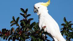 White Parrot, Desktop Screen Photos, Wallpapers-Web.com