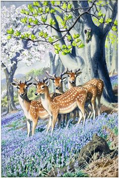 Shopping with Mother to Tootles the Taxi: 100 years of beautiful Ladybird book designs – in pictures - What to Look for in Spring British Wildlife, Wildlife Art, Bambi, Kunst Online, Ladybird Books, Deer Art, Children's Book Illustration, Book Illustrations, Botanical Illustration