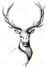 Resultado De Imagen Para Dibujos De Venados A Lapiz Dibujos In