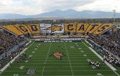 Montana State University- this is what next fall will be looking like. #mountains #bobcats