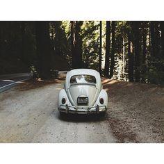 VW / photo by Sabrina Bedlington