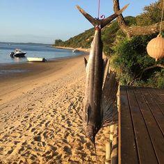 One way to start a divetrip.  #coatesmans #spearfishing #spearing #speargun #underwater #fishing #fish #freediving #freedive #freediver #ocean #dive #diving  #roballen #spearo #boating #pescasub #apnea #sailfish #inhaca #mozambique