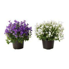 IKEA - CAMPANULA PORTENSCHLAGIANA, Pianta da vaso, Decora la tua casa abbinando piante e portavasi adatti al tuo stile.