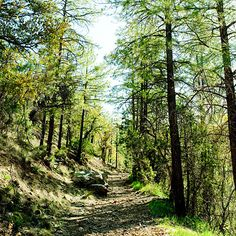 Mt Lemmon walk in Tucson AZ