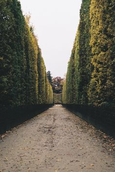 through the hedges