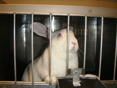 Support the FACT Act: End secrecy about wasteful federal animal testing