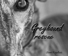 Greyhound Rescue - A wonderful book photographed and compiled of Hemopet's Greyhounds by Sherri Regalbuto.