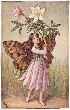 """Vintage print 'The Windflower Fairy' by Cicely Mary Barker from """"The Book of the Flower Fairies""""; Poem and Pictures by Cicely Mary Barker, Published by Blackie & Son Limited, London [Flower Fairies - Spring] Cicely Mary Barker, Flower Fairies Books, Fantasy Magic, Fantasy Art, Illustrator, Spring Fairy, Fairy Pictures, Vintage Fairies, Beautiful Fairies"""