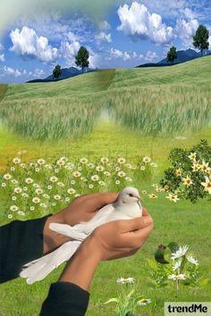 White+Dove od Mirna M - trendme.net