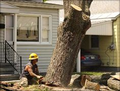 Tree removal is a highly technical task and requires expertly trained and fully qualified professionals. Apollo Tree Removal for Montrose can guarantee you a team of dedicated professionals.