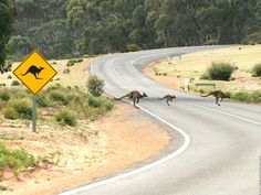 Picture showing the funny signs in Australia do mean something!