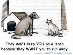 Funny Dog Quotes And Sayings | Cute pets : dog and cat – funny quotes @Shannon Fisher