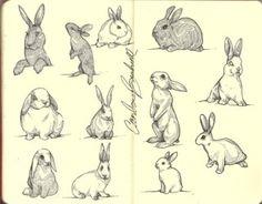 Bunnies Bunnies Bunnies!!! I love Bunnies!!!