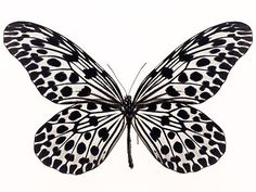 love the almost polka dot wing pattern