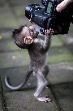 by Carlotta Rebonato Baby monkey attack ! by Carlotta Rebonato Small Monkey, Cute Baby Monkey, Pet Monkey, Fun Baby, Baby Animals Super Cute, Cute Little Animals, Cute Funny Animals, Funny Monkeys, Primates