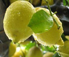 Può una combinazione di vitamina C far scendere le piastrine? La risposta del Dottor Paolo Bellingeri…