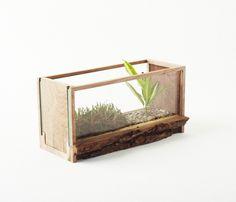 MINI 1 - Glass Terrarium - Edition 00