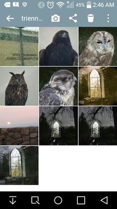 """""""Over the years, I have been able to tke pictures of nature , of scenics , and of community events and more.  These are some of my more recent photos taken.  I love being able to share what I see with others"""". artfromperry"""