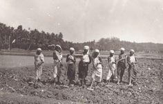 Aerating+the+land+by+breaking+hard+blocks+of+sand+after+ploughing+-+Kattayodakkal,++Kerala,+1921