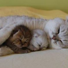 Cuddle with Mama Kitty.