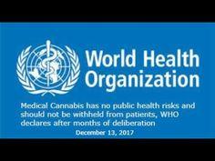 Medical cannabis has no health risks, says WHO