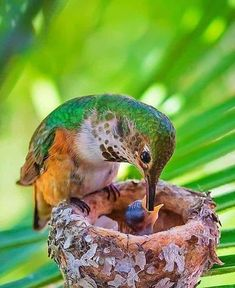 Pretty Birds, Beautiful Birds, Animals Beautiful, Cute Animals, Hummingbird Pictures, Hummingbird Flowers, Bird Mom, Water For Elephants, Kinds Of Birds
