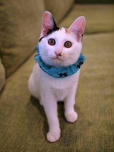 マロンの物語 feat.猫カフェ Cats-ルナマリアちゃん