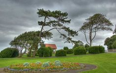 Trees on Clevedon SeaFront