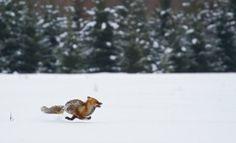 luontokuva | Suomen Luonto