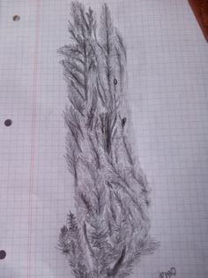 Grafito pino