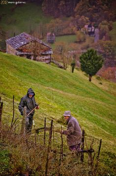 These are the real heros. Vega de Pas, Cantabria, Spain.